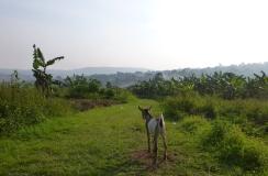 Uganda. Foto: Lovise Ribe.